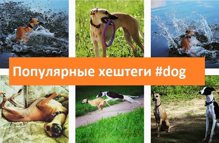 фото Популярные хештеги в инстаграм собаки dog животные